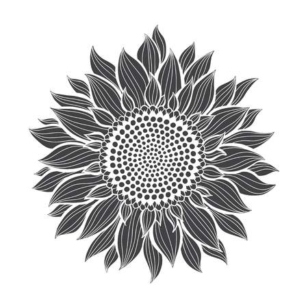 Sunflowers isolated on white background. Botanical vector illustration. Silhouette.