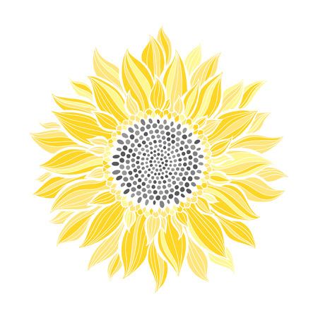 Girasole isolato su sfondo bianco. Illustrazione botanica di vettore.