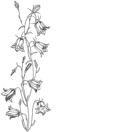 Vector illustration of  flowers bluebells , design element. Invitation, greeting card.