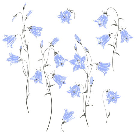 Set  of flowers campanula,  isolated on white background. Vector illustration.
