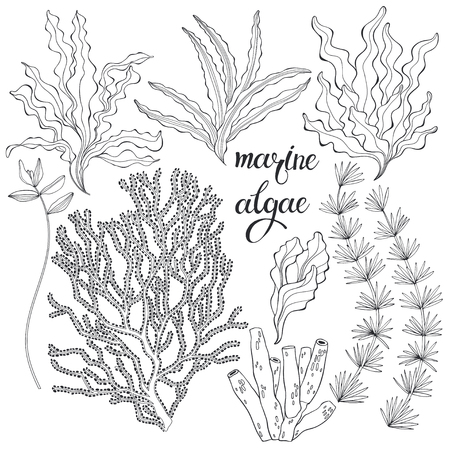 Set of cartoon underwater plants and creatures. Vector illustration, isolated elements. Set of cartoon underwater plants and creatures.