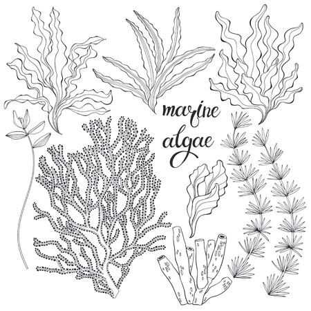 Set von Cartoon-Unterwasserpflanzen und Kreaturen. Vektorillustration, isolierte Elemente. Set von Cartoon-Unterwasserpflanzen und Kreaturen.