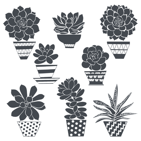 illustration of succulents in pots. Silhouettes. Can be used as a design element.