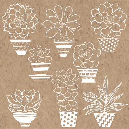 Hand drawn vector illustration of succulents in pots on kraft paper.  Can be used as a design element. 矢量图像