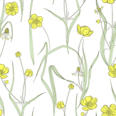 Buttercups and blades of grass. Flowering wildflowers. Vector illustration. Nature background.