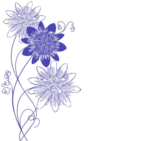 Flowering passionflower on white. Vector. Nature background.