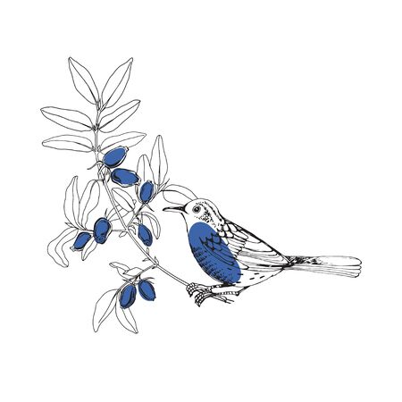 Bird on the branches of honeysuckle, can be an element your design.