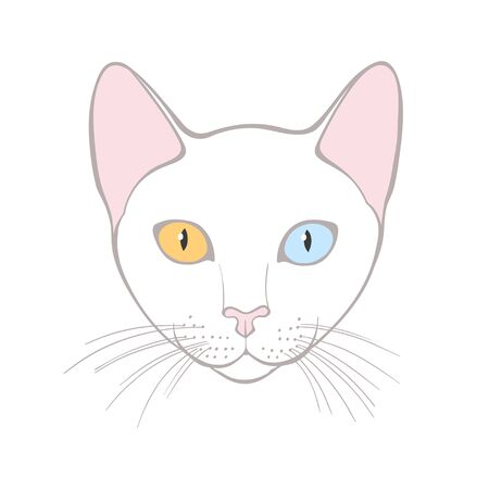 Cao mani, cat with different colored eyes, can be an element your design.