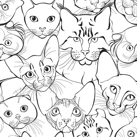 Ð¡ats face of different breeds. Animal art background. Vector. Illustration