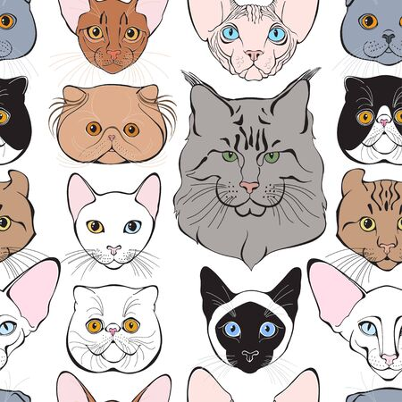 Ð¡ats face of different breeds. Animal art background. Vector.