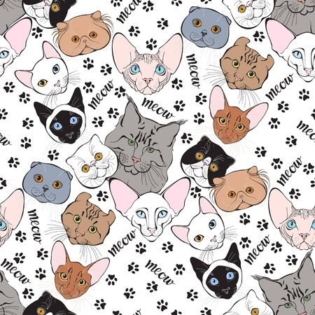 Ð¡ats face of different breeds and trace cat feet. Animal art background. Vector.