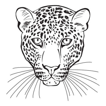 Leopard face on white. Can be an element your design. Vettoriali