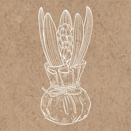 A young hyacinth isolated on kraft paper. Vector hand-drawn illustration. Element for design.