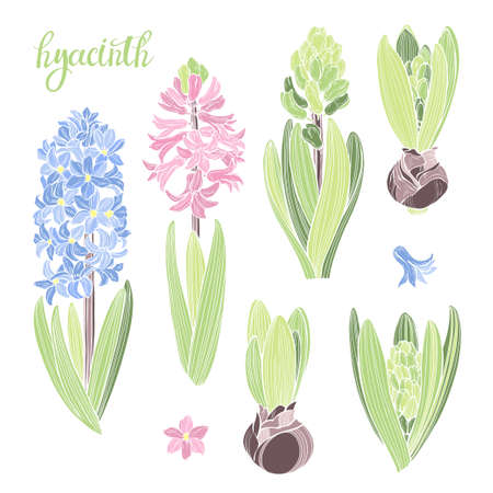 Hand drawn hyacinth on white. Six floral elements. Vector isolated floral elements for design. Perfect for greeting cards, invitations. Silhouette. Vector Illustratie
