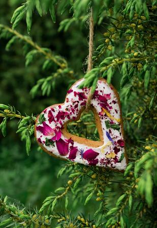 enebro: Galletas colgando de una rama de enebro