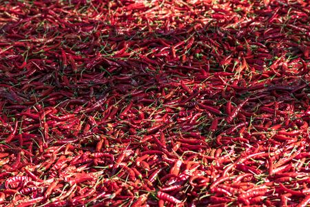 Chillies drying in the sun, Myanmar