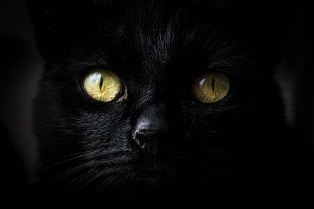 Close-up on a cute muzzle of a black cat