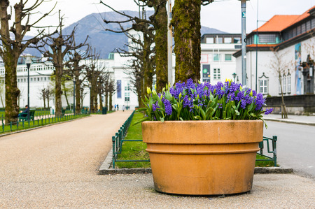 residential idyll: Park in centrum of Bergen. Norway