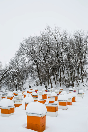 wintering: Bee hives at wintering place