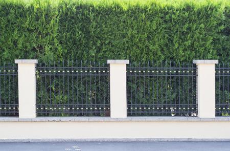 rejas de hierro: Cerca de la Casa con barras de hierro forjado y thuja árbol ornamental en el fondo