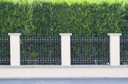 thuja: House fence with forged iron bars and thuja ornamental tree in the background