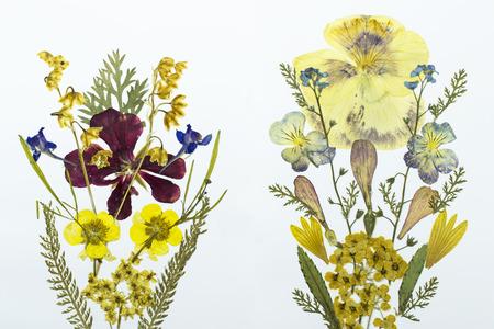 Fantastisch Verschiedene Arten Von Weißen Blumen Fotos - Kleider ...