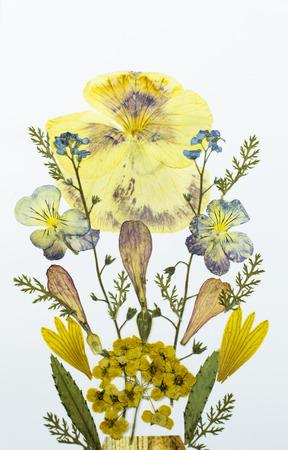 Zwei Gedrückt Und Getrockneten Blumen Blumensträuße, Seite An Seite ...