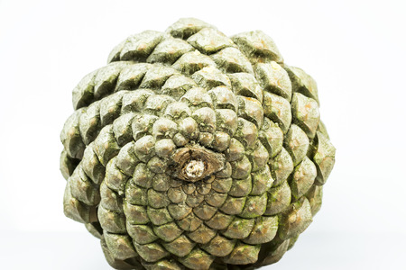 fibonacci number: Bottom side of a pine cone , showing beautiful geometric arrangement of its scales, isolated on white