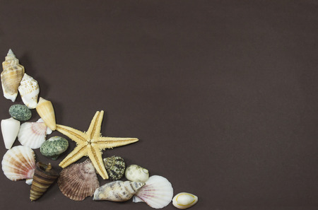 fossilized: Shells of different marine creatures and fossilized yellow starfish, against a brown background
