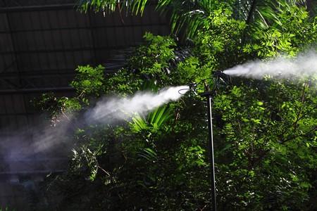 botanic: Morning irrigation sprinkler working in botanic garden