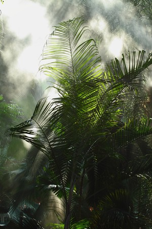 Morning irrigation sprinkler working in botanic garden Stock Photo - 7868546