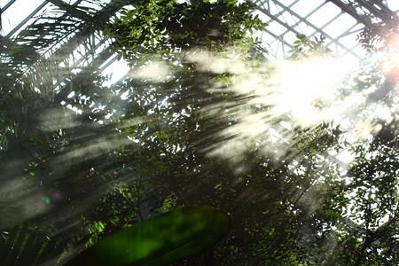 Morning irrigation sprinkler working in botanic garden Stock Photo - 7868548