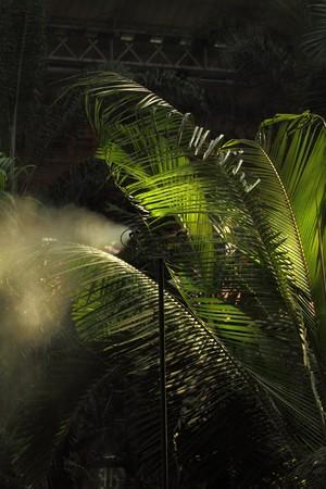 Morning irrigation sprinkler working in botanic garden Stock Photo - 7868526