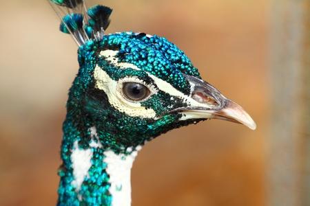 Australian Bird Stock Photo - 9570935