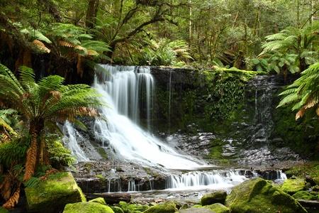 mt: Gorgeous Russel Falls splash down in the Mt Field National Park, Tasmania, Australia.