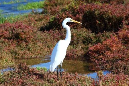 White Heron Stock Photo - 9569879