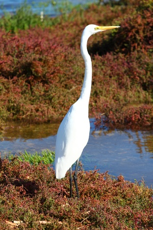 White Heron Stock Photo - 9575350