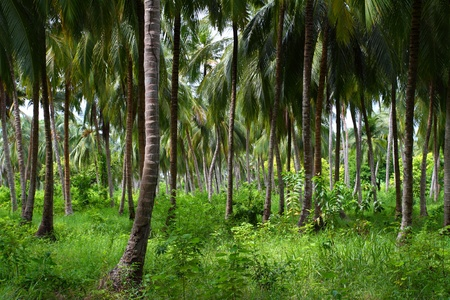 Green Palm Forest in Colombian Island Stock Photo - 10393006
