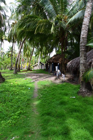 Colombian Village over Palm Forest Stock Photo - 10393012