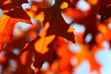 beautiful autumn leaves photo