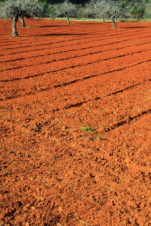 Red cultivated field in Ibiza, Balearic Island, Spain  photo