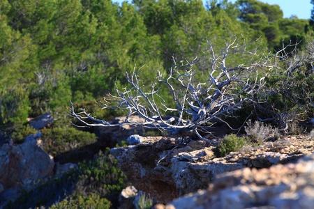 Typical dune vegetation over natural background photo