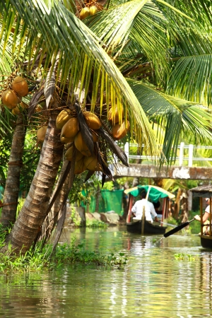 Palm tree tropical forest in backwater of Kochin, Kerala, India photo