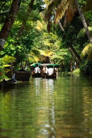 Palm tree tropical forest in backwater of Kochin, Kerala, India Standard-Bild