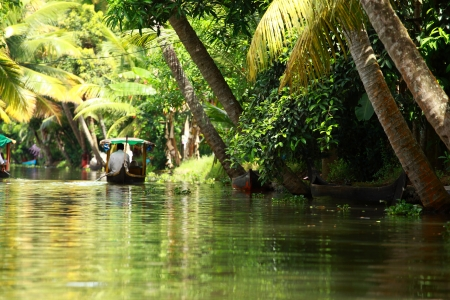 Palm tree tropical forest in backwater of Kochin, Kerala, India Stock Photo - 16149445