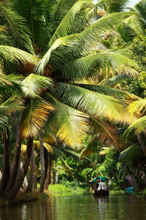 backwater: Palm tree tropical forest in backwater of Kochin, Kerala, India Stock Photo