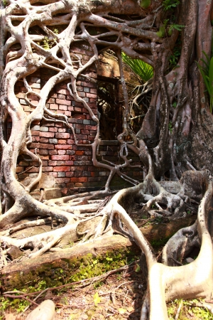 Ruin of abandoned building covered with roots on Ross Island. Andaman Islands, India  photo