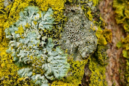 Closeup of a yellow mushroom on tree bark photo