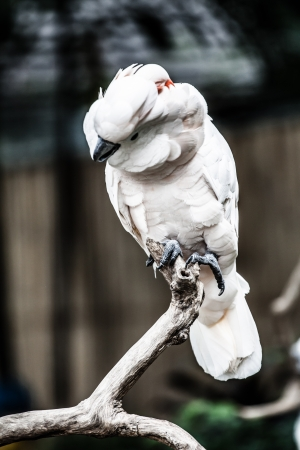 White parrot ( HDR image ) Stock Photo - 17144641