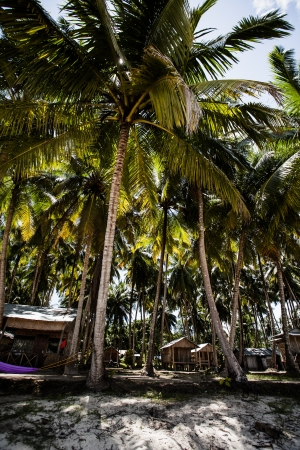 palm garden: Tropical palm garden in beautiful paradise ( HDR image )